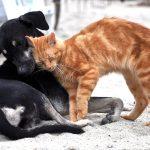 52 udruge Mreže za zaštitu životinja apeliraju: Ne napuštajte životinje zbog koronavirusa!
