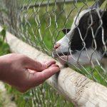 Prijatelji životinja pozivaju grad Varaždin da izgradi sklonište i utočište, a ne zatvor za životinje