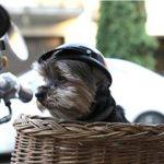 Zagrepčani poslali pomoć napuštenim psima u Slavoniji