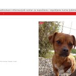 Prijatelji životinja: konačno u funkciji Jedinstveni informacijski centar za izgubljene i napuštene životinje