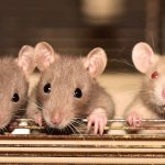 Prijatelji životinja pozivaju građane da štite prava životinja