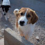 Mreža za zaštitu životinja: U šibenskom skloništu umire svaki peti pas!