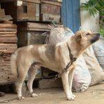 Prijatelji životinja: U Njemačkoj obavezne šetnje za pse, a u Hrvatskoj pate na lancu