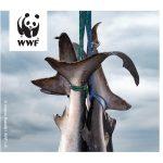 WWF: Neregulirani ribolov u Indijskom oceanu ugrožava život u moru