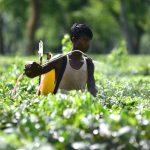 Aktivisti traže da EU zabrani izvoz zabranjenih pesticida u treće zemlje