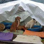 Prijatelji životinja zbog potresa pozivaju na pomoć stradalima umjesto petardi za Novu godinu