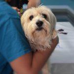 Velika vijest za sve skrbnike pasa: Psi se moraju cijepiti u skladu s uputom proizvođača cjepiva