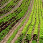 Europska komisija objavila koje će ekološke prakse poticati u poljoprivredi