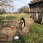 Mreža za zaštitu životinja nastavlja kampanju za potpunu zabranu držanja pasa na lancu