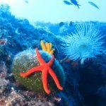 Društvo 2000 milja predstavlja projekt popularizacije znanja o moru kao STEM područja