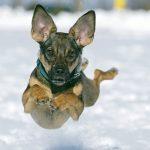 Prijatelji životinja: Zaustaviti nekontrolirano razmnožavanje pasa s velikom snagom ugriza